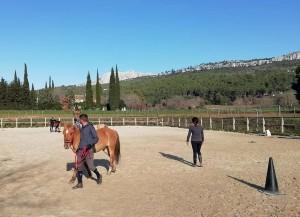La formation BPJEPS Activités Equestres 2020-2021
